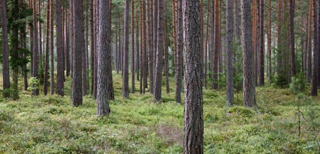 Skogsbruksplan Furuvik